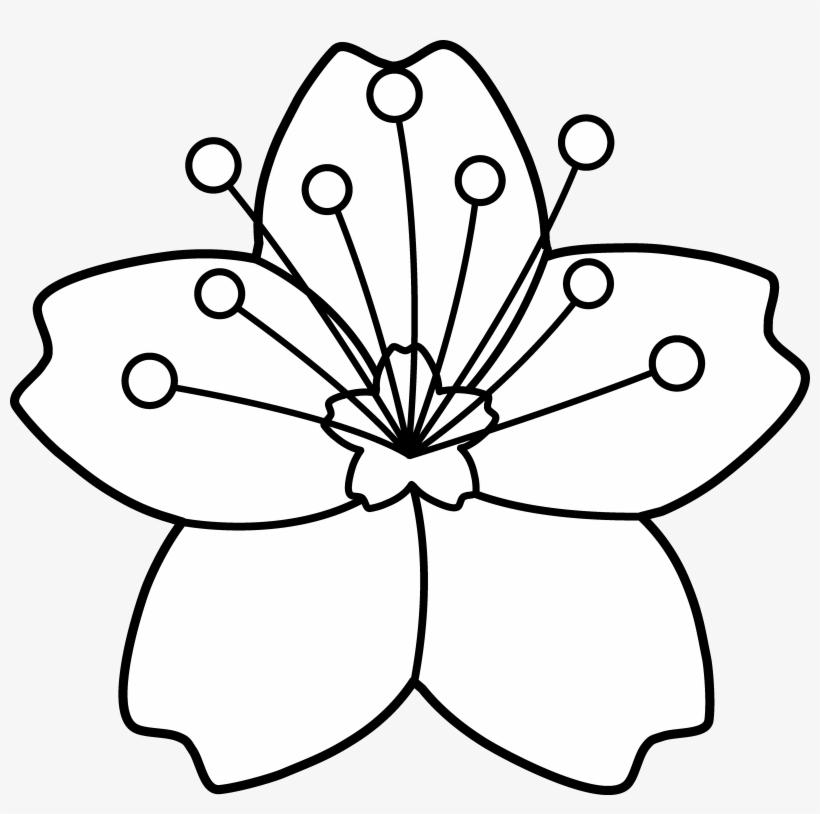 820x814 Cherry Blossom Line Art