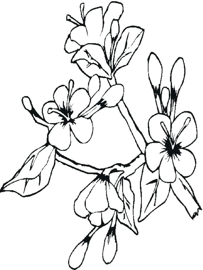 648x864 Japanese Cherry Blossom Coloring Pages Nature Cherry Blossoms
