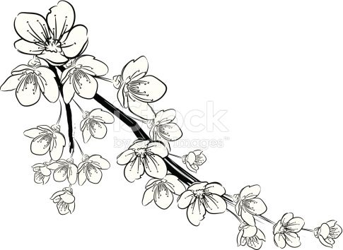 485x354 Afbeeldingsresultaat Voor Black And White Cherry Blossom Drawing