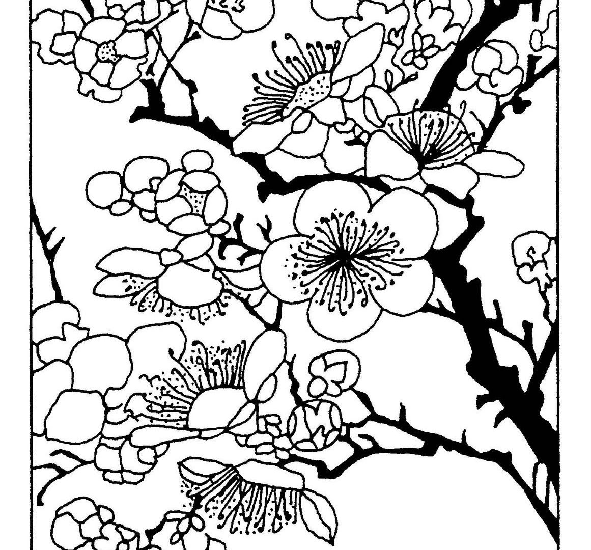 1161x1080 Outstanding Cherry Blossomoring