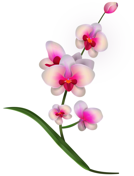 456x600 Collection Of Free Orchid Drawing Pencil Download On Ui Ex
