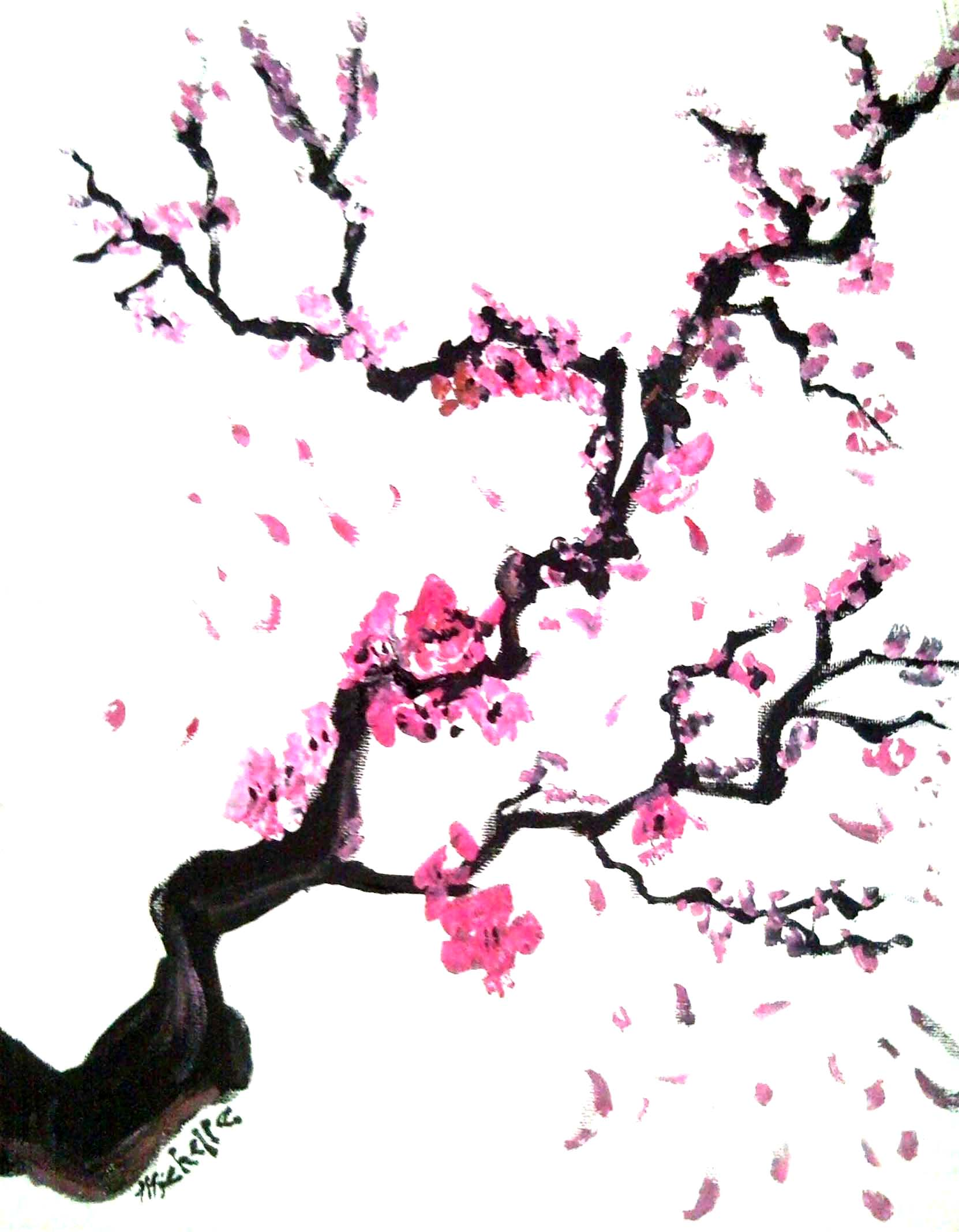 1662x2136 Images For Gt Cherry Blossom Flower Pencil Drawing