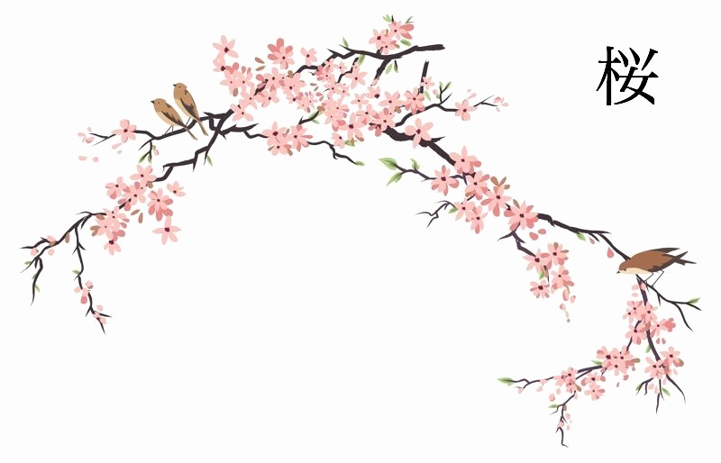 800x514 Beautiful Japanese Cherry Blossom Sketch