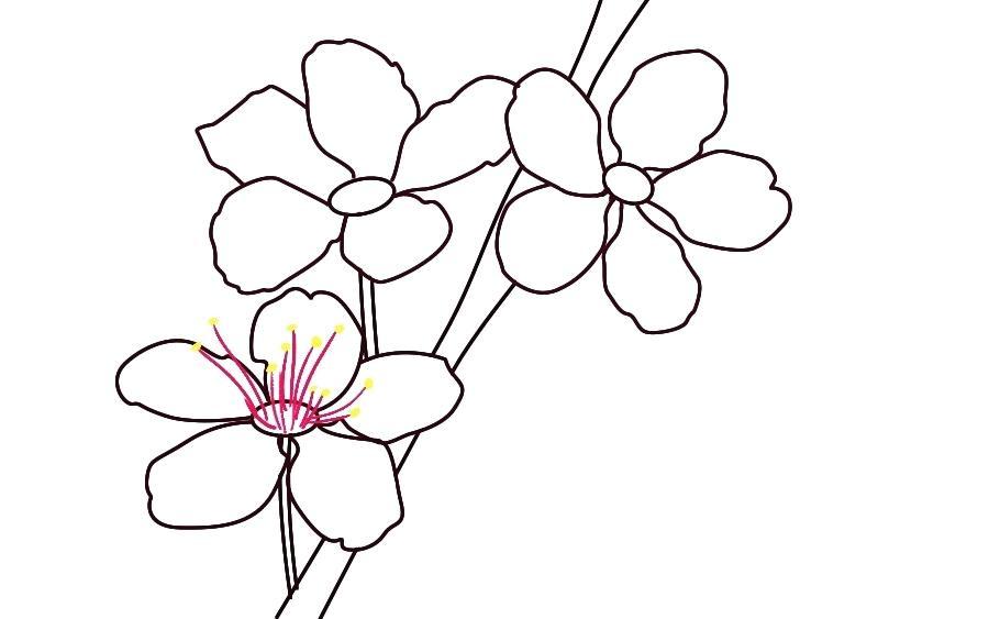 900x563 Drawing Of Cherry Blossom Tree Running
