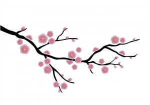 300x210 simple cherry blossom drawing cherry blossom tree drawing cherry