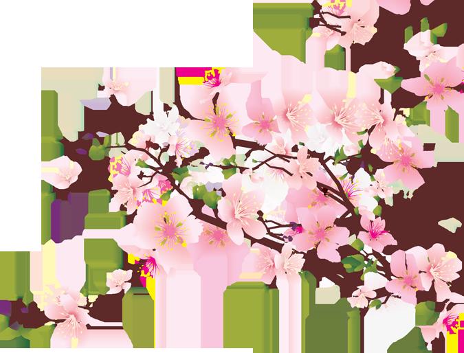 Cherry Blossom Tree Pencil Drawing