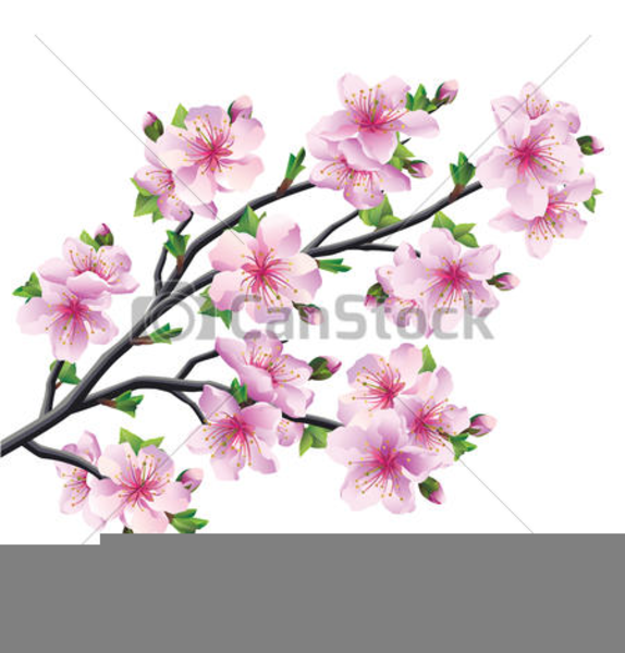 574x600 Huge Collection Of 'cherry Blossom Tree Clipart' Download More