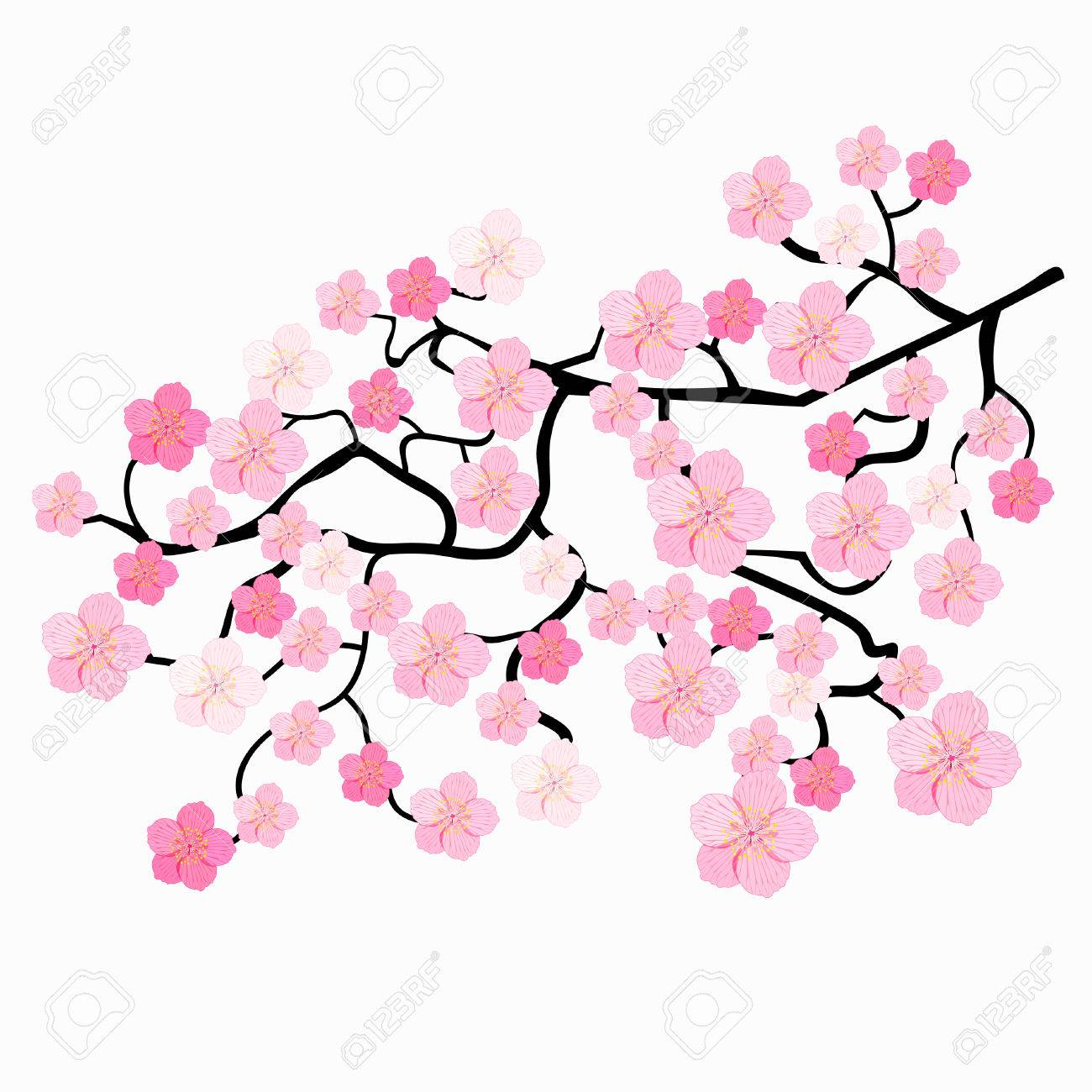 1300x1300 Huge Collection Of 'japanese Cherry Blossom Clipart' Download
