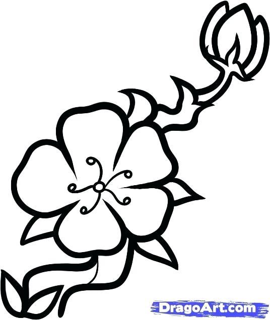 536x636 cherry blossom draw drawn cherry blossom basic cherry blossom