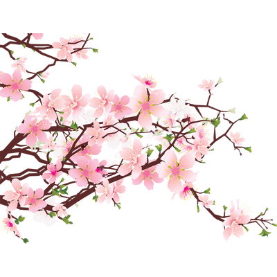 Cherry Blossoms Tree Drawing