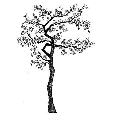400x400 Cherry Blossoms Coloring Pages Best Of Cherry Blossom Tree Drawing