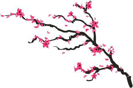 438x289 Drawing Details Cherry Blossom Transparent Png Clipart Free