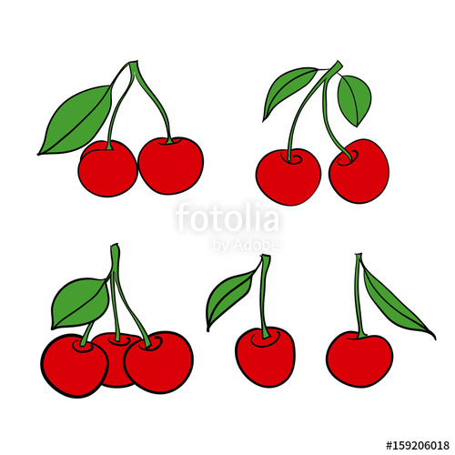 500x500 Cherry Isolated Berries On White Background Vector Drawing