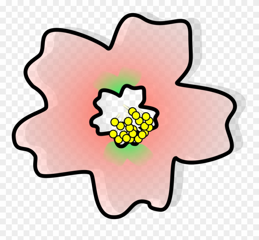880x813 Japan Cherry Blossom Flower Drawing