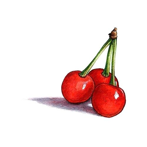 500x500 Cherry Drawing How To Draw A Cherry Cherry Drawing Pic