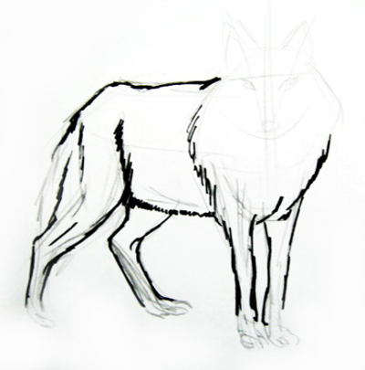 400x405 How To Draw A Gray Wolf