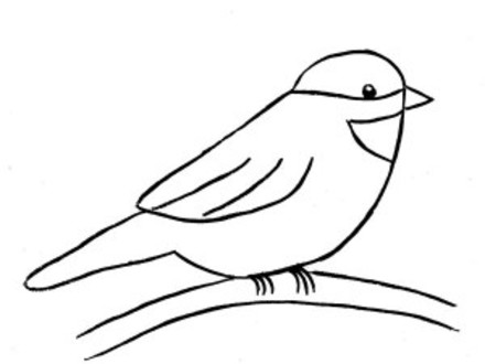 440x330 Chickadee Bird Coloring Pages Clipart Best, Chickadee Coloring