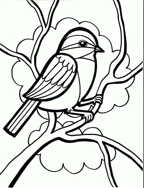 600x781 Chickadee Drawing Coloring Page