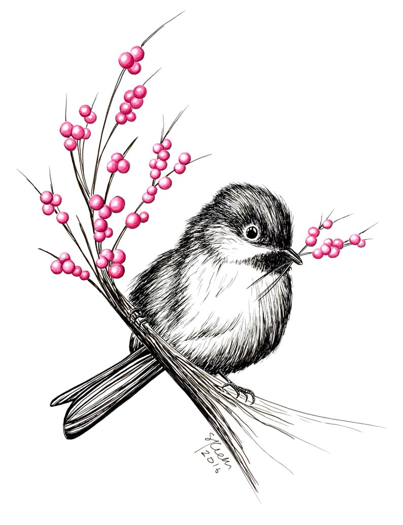794x1032 Chickadee With Berries Original Pen Ink Illustration Etsy