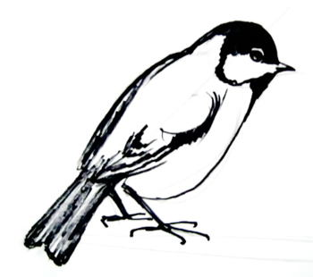 350x310 Great Tit Drawing
