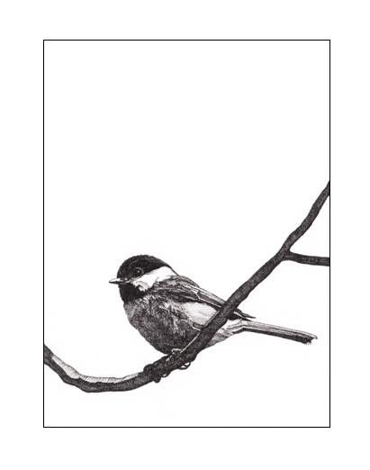 411x522 Pen And Ink Chickadee Note Cards For The Home In Ink Pen
