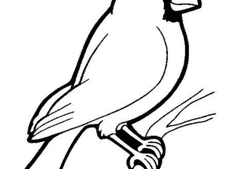 Chickadee Line Drawing