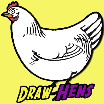 350x350 How To Draw Chickens Hens With Easy Step