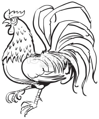 315x380 Illustration Of Rooster Vector Art, Royalty And Illustrators