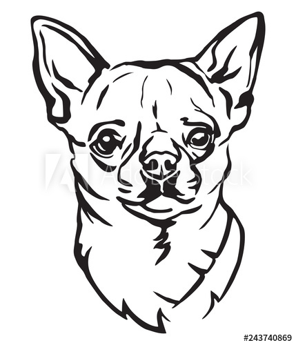429x500 Decorative Portrait Of Dog Chihuahua Vector Illustration