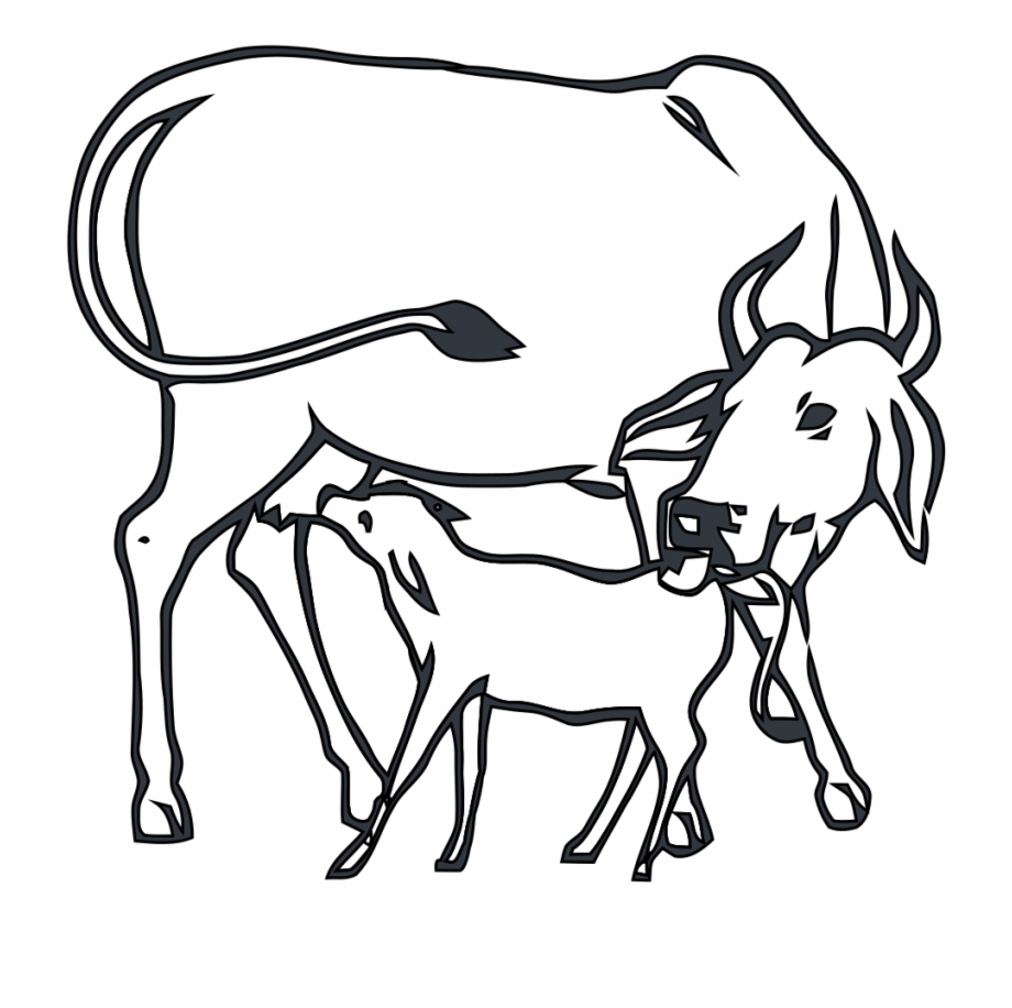 920x916 Drawing Cow Child