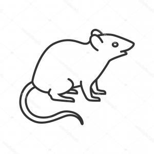 300x300 chinchilla cute small rodent animal vector sohadacouri