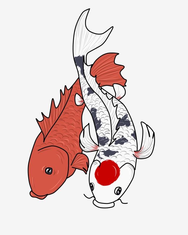 640x800 Red Fish Koi Carp, Chinese Koi, White, Fish Png Clipart Image