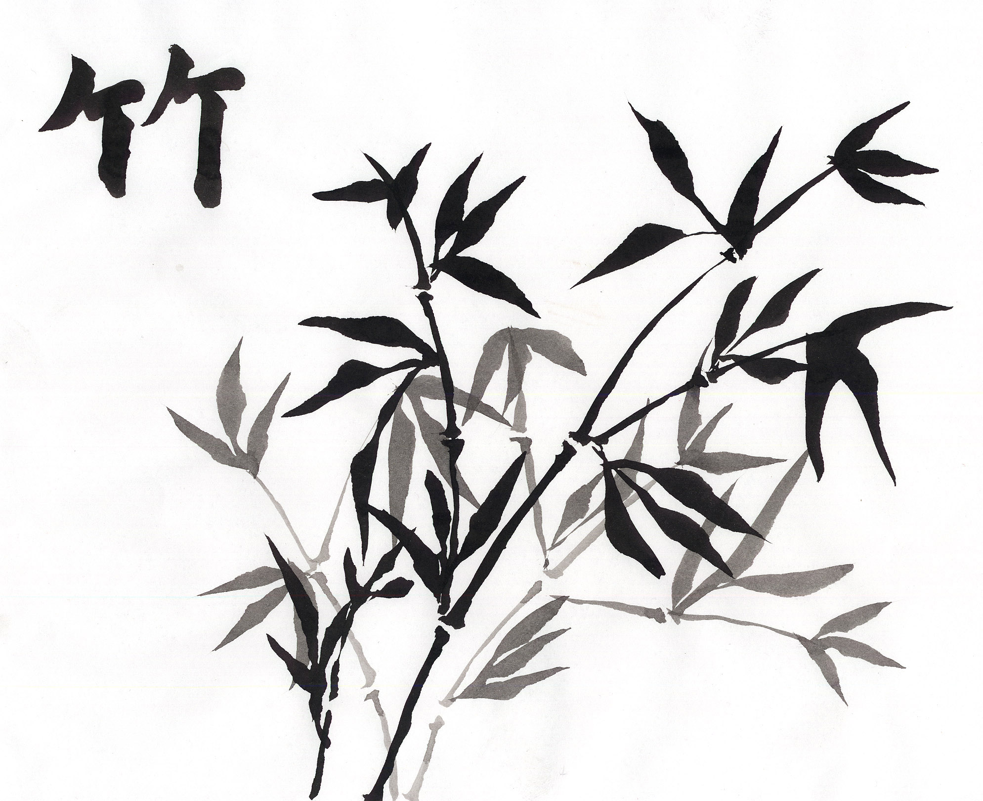 1989x1620 Bamboo Drawing Transparent For Free Download