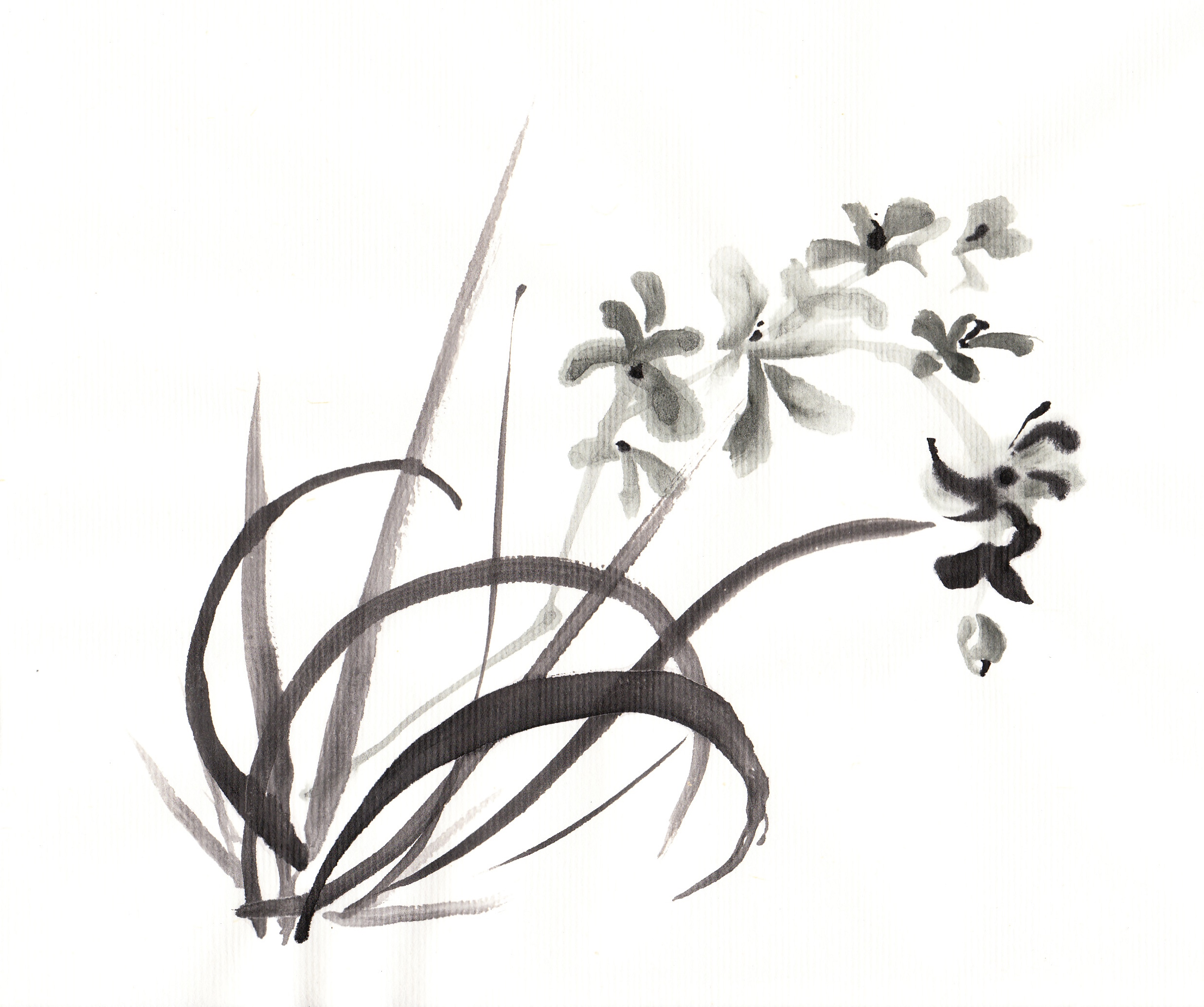 2475x2070 Chinese Drawing Orchid For Free Download