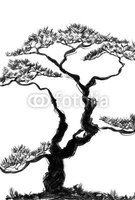 270x400 Chinese Pine Watercolor And Ink Illustration In Style Sumi E, U