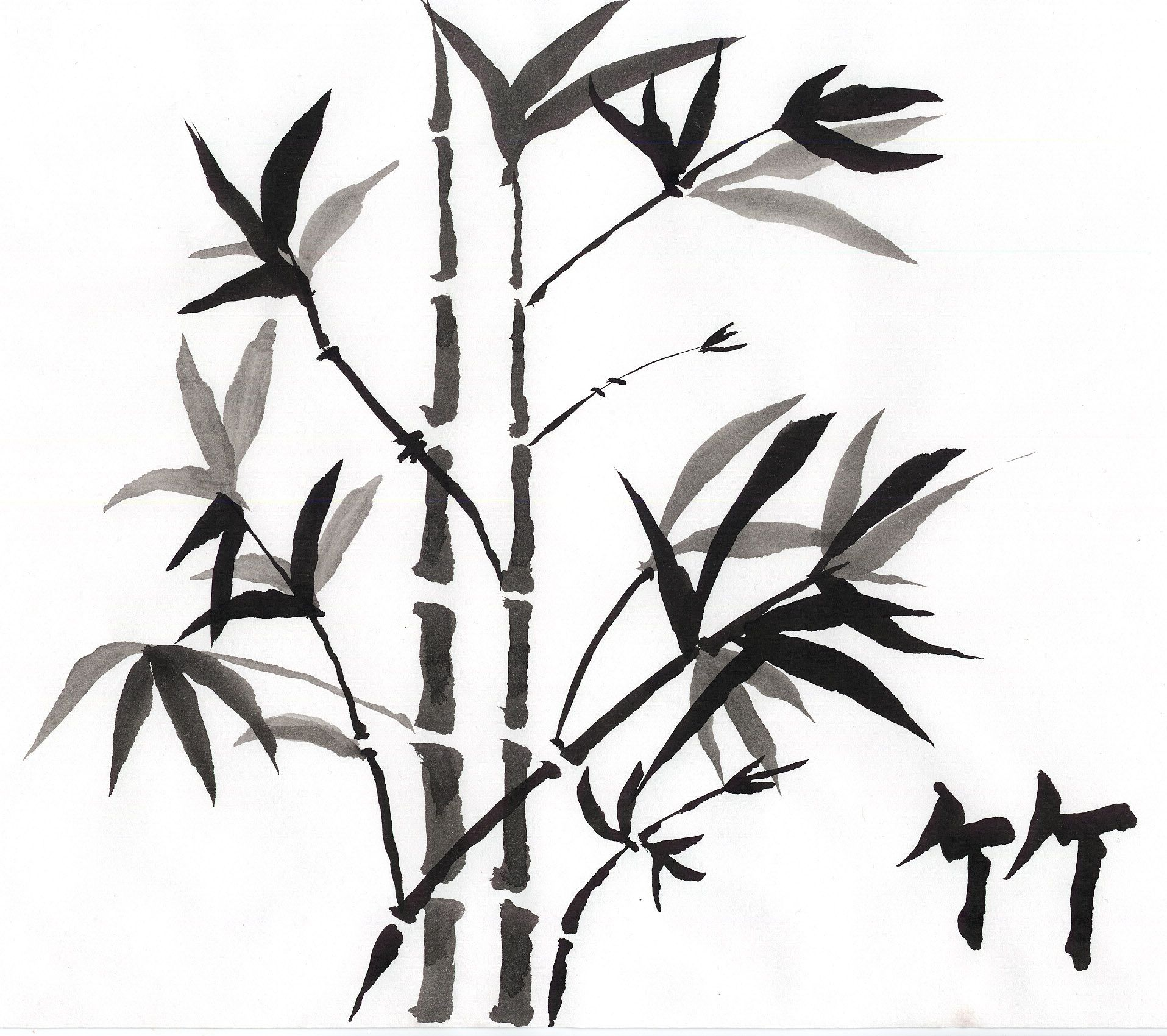 1915x1700 jeri's bamboo shoots bamboo bamboo art, bamboo drawing, art