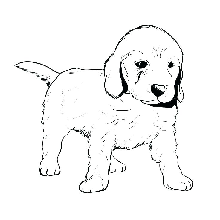 Chocolate Lab Drawing   Free download on ClipArtMag