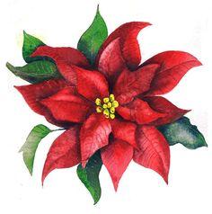 236x238 awesome christmas poinsettia images christmas poinsettia