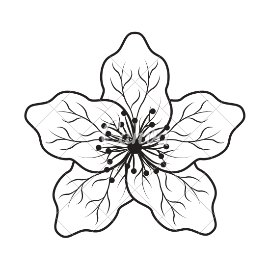 550x550 rotate resize tool chrysanthemum drawing oriental