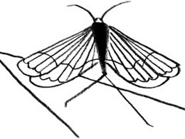 260x195 craigslist missed connections for cicadas the new yorker
