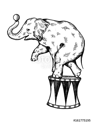 375x500 Circus Elephant Engraving Vector Stock Image And Royalty Free