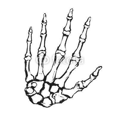 400x400 hand drawn hand bones anatomical drawing human skeleton hand