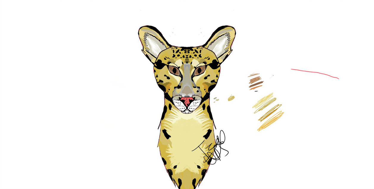 1257x636 Clouded Leopard Drawing