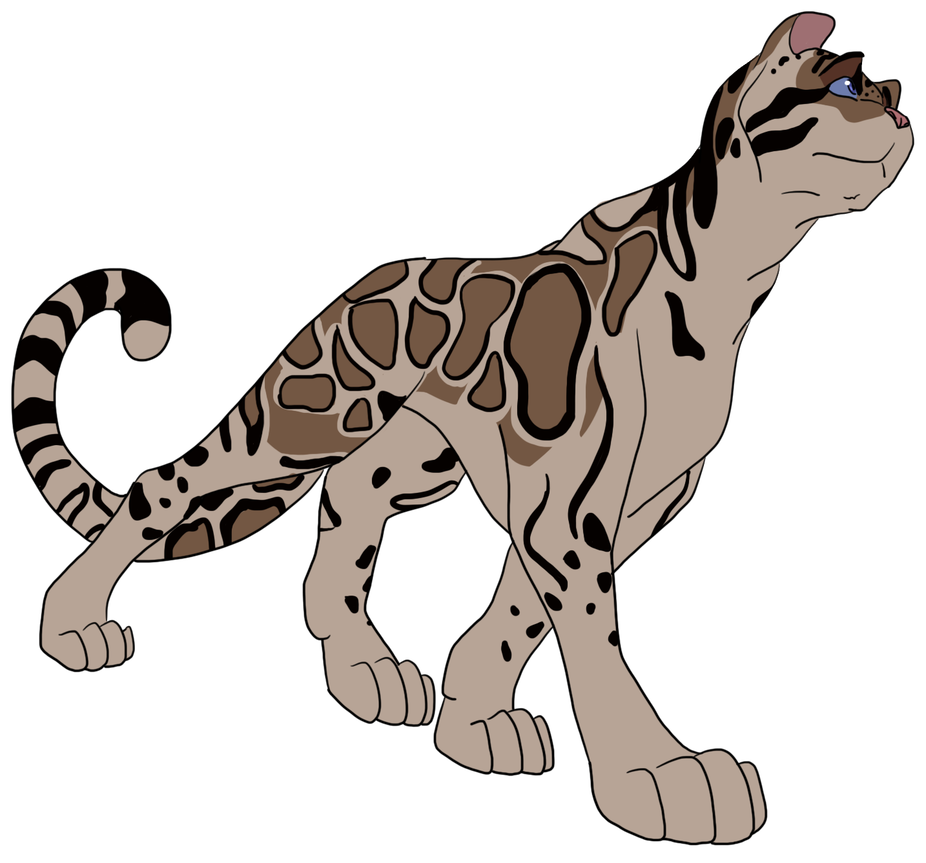 926x863 Day Clouded Leopard