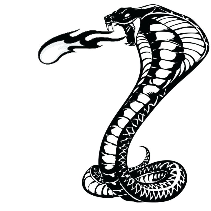 728x728 drawing snake how to draw a realistic snake step drawing snake