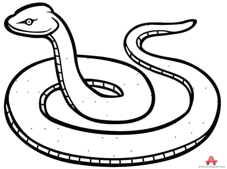 789x589 Easy Snake Drawing Draw King Cobra Snake Rattlesnake Drawing