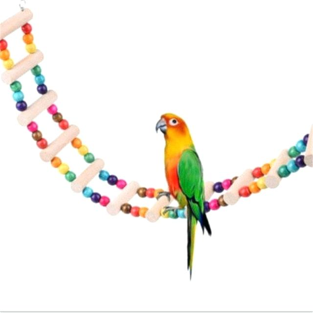 640x640 parrot to draw how to draw a parrot parrot cartoon drawing images