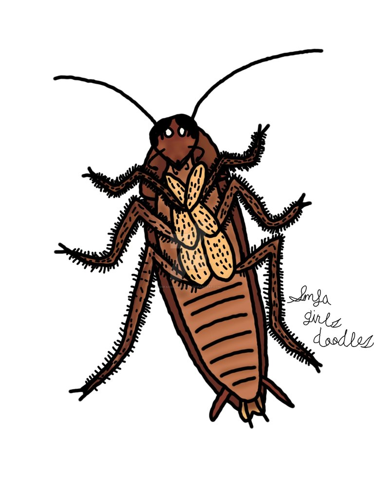 774x1032 Cockroach Drawing