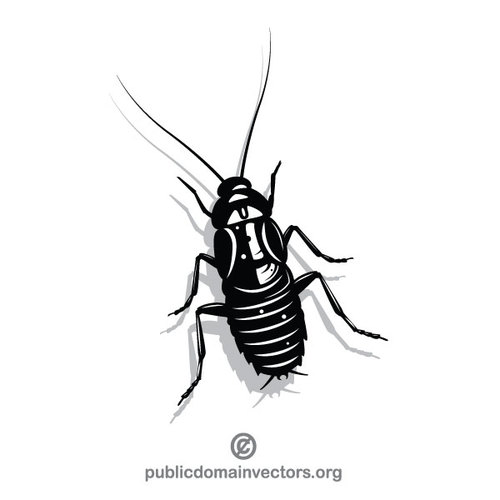 500x500 Cockroach Drawing