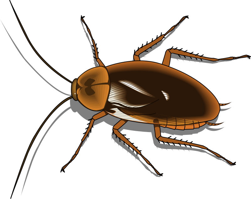 800x633 Collection Of Free Cockroach Drawing Clipart Download On Ui Ex